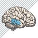 ALCOHOL EN DE HYPOTHALAMUS EN HYPOFYSE