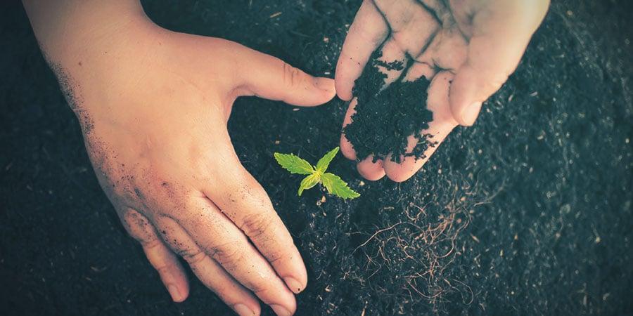 Groeimedium Voor Cannabis