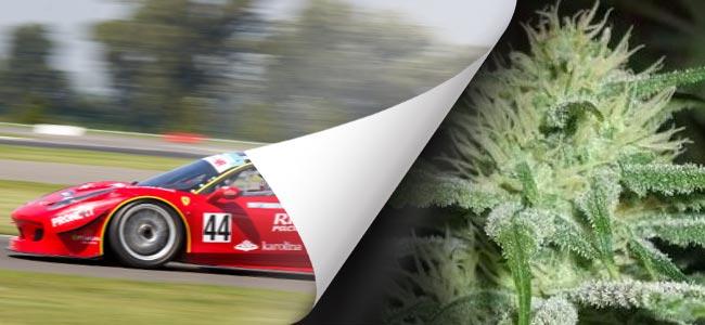 Auto Speed Bud (Female Seeds)
