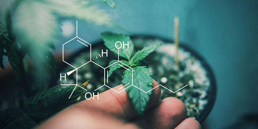 Wat Zijn De Effecten Van De Verschillende Cannabinoïden?