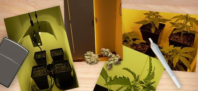 Sticky Beast Automatic: Vegetatieve Groei