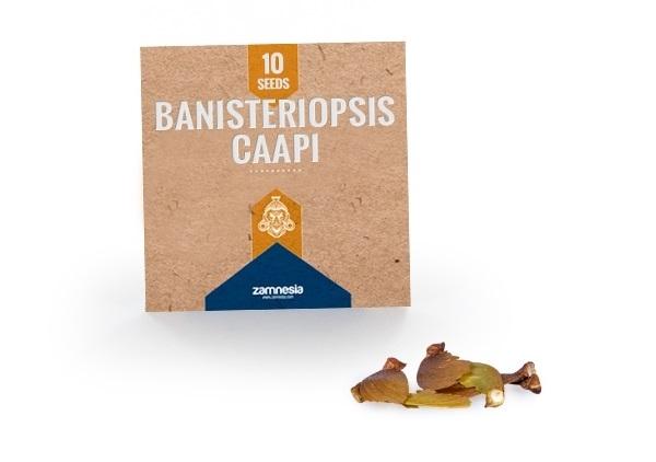 Banisteriopsis Caapi Zaden