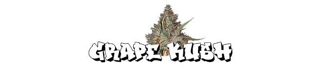 Grape Kush - Cali Connection