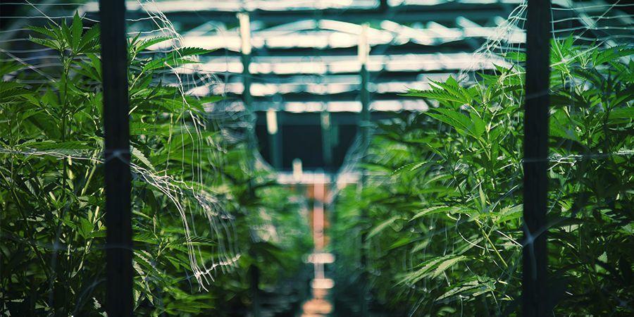 Ga op cannabis excursie