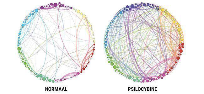 PSILOCYBINE & ONZE HERSENEN