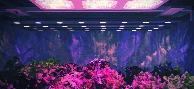 Lichtkracht Per Plant