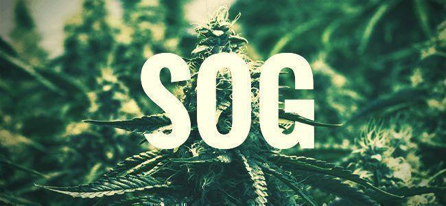 SOG - SEA OF GREEN