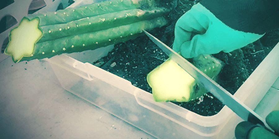 Laat Je Niet Weerhouden Om Cactussen Te Kweken