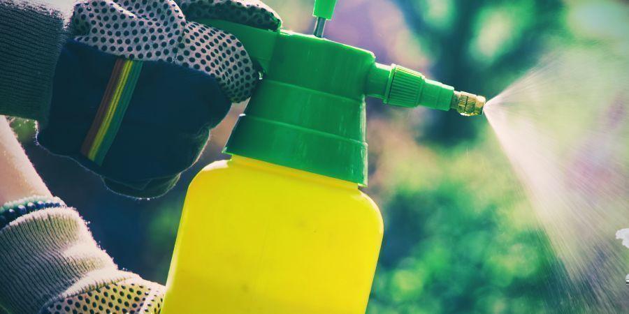 Insecticiden Kunnen Je Cactus Beschadigen Door Fototoxiciteit