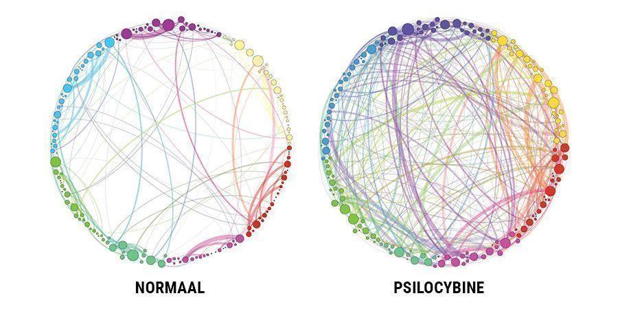 WAT IS HET EFFECT VAN PSILOCYBINE?