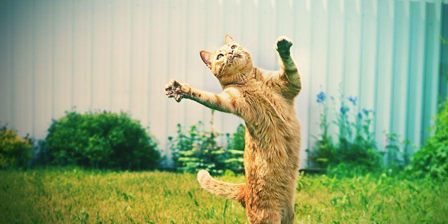 Katten Die Graag High Worden - Kattekruid