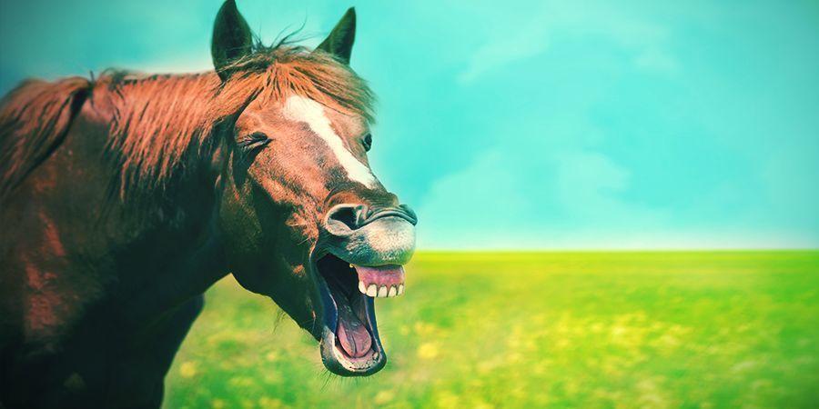 Paarden Die Graag High Worden - Locoweed