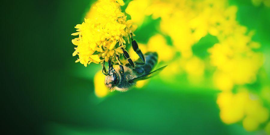 Bijen Die Graag High Worden - Alcohol
