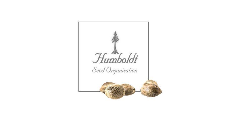 Blue Dream (Humboldt Seeds)