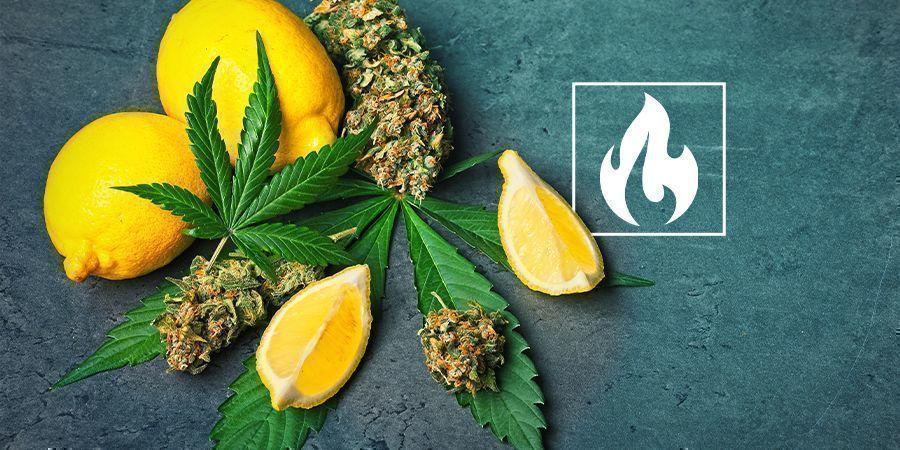 Cannabinoids, Terpenes, Temperatures & You