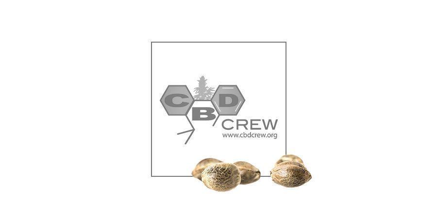 CBD Yummy (CBD Crew) feminized