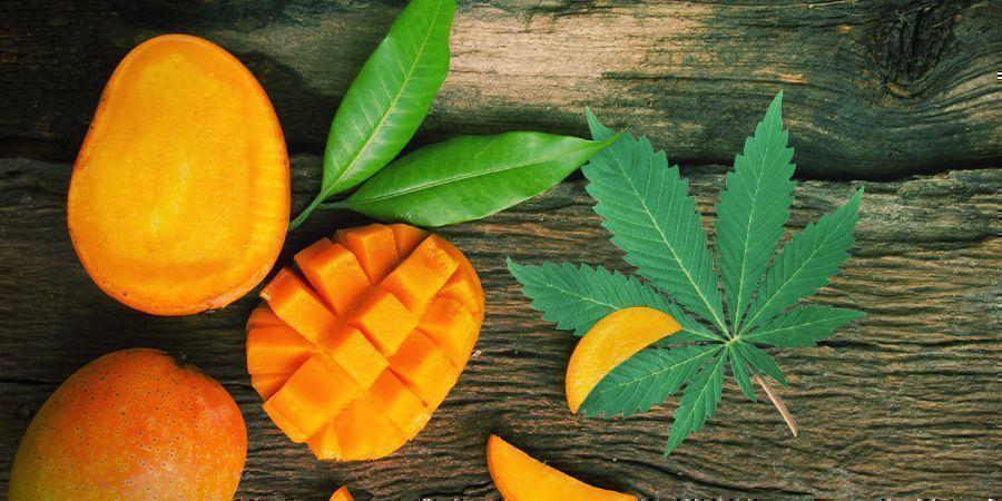 Pep Je Cannabis Op Met Een Portie Mango's