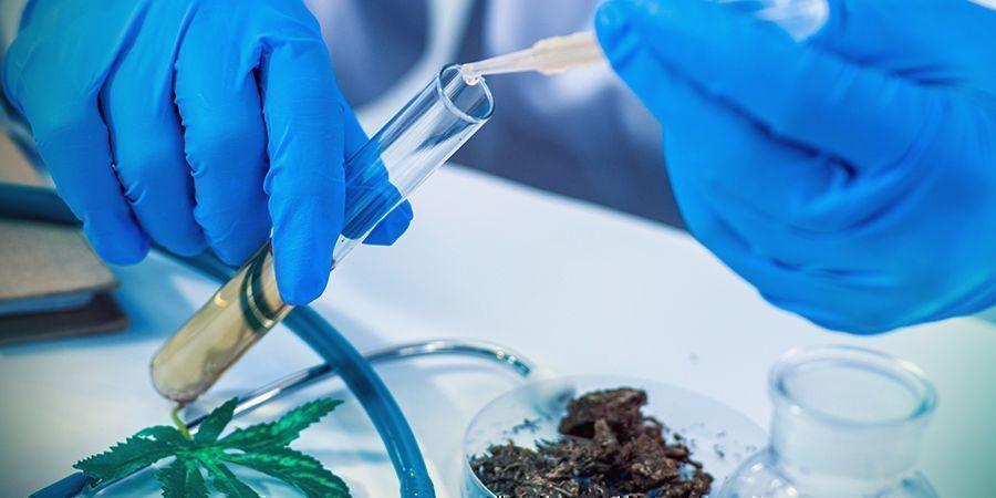 THC: Een Krachtig, Natuurlijk Medicijn
