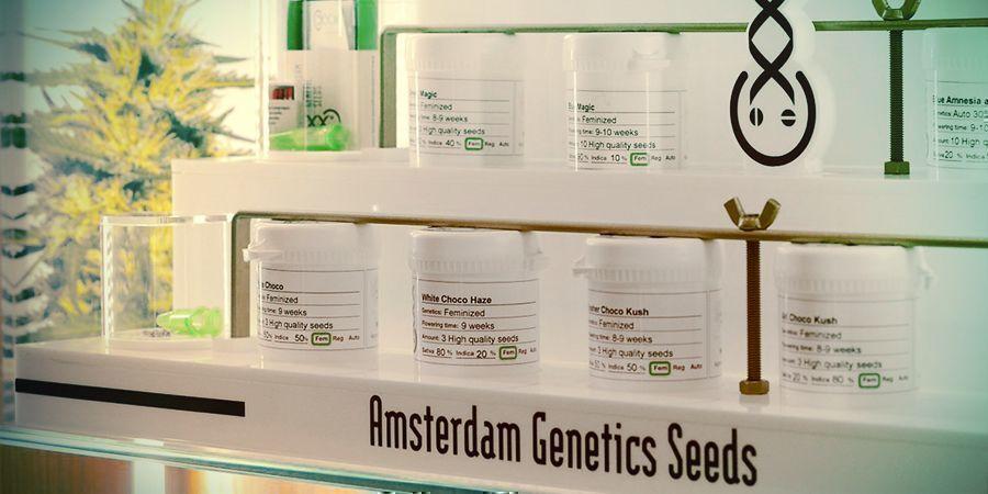 SEEDBANK DEL MESE: AMSTERDAM GENETICS