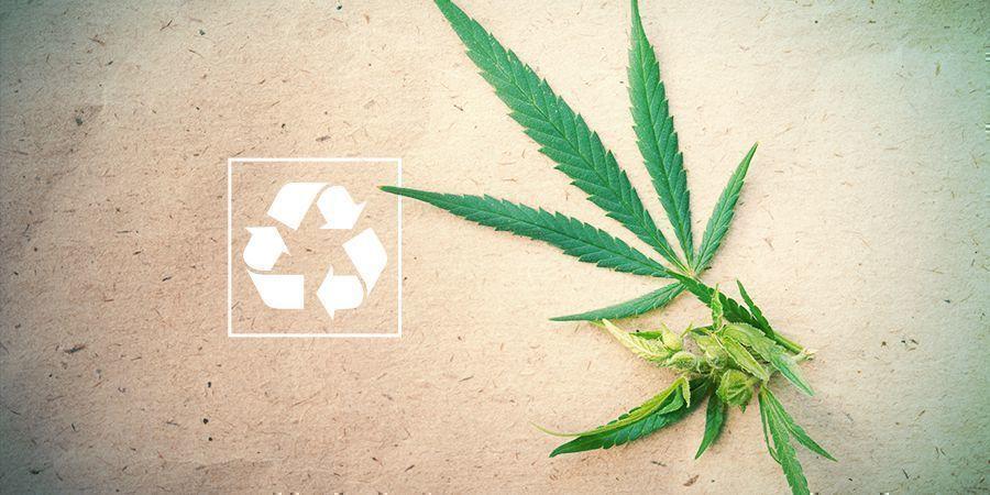 Cannabis En Het Milieu