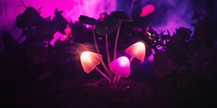 Magic Mushrooms Zijn Relatief Veilig