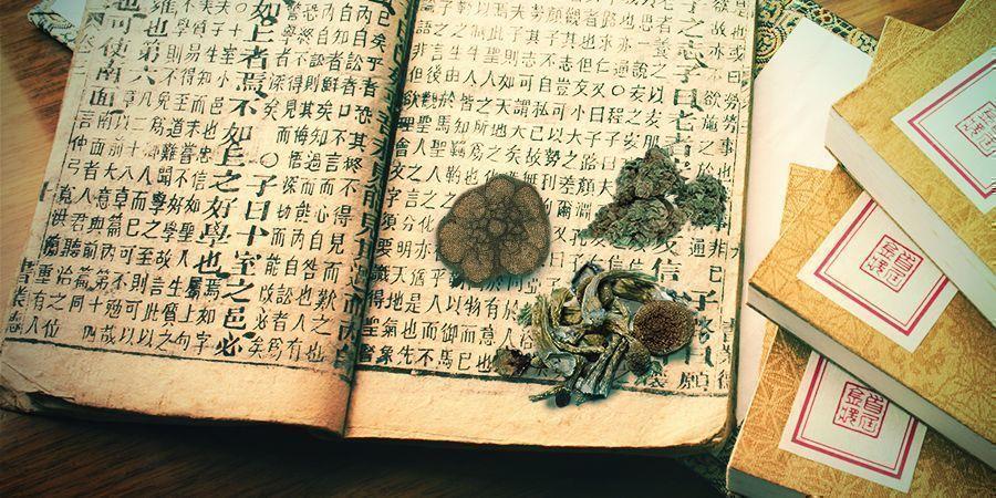 Cannabis, Paddo's, Ayahuasca, Peyote - Oude Geneesmiddelen En Spirituele Wegwijzers