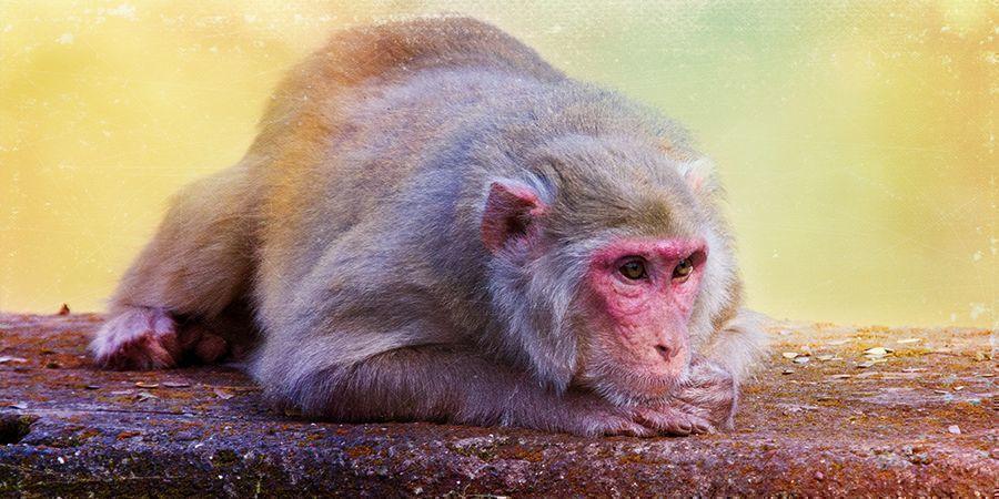 """De Opvolger Van De """"Stoned Ape""""-Theorie"""