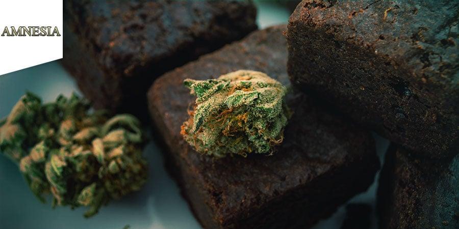 Coffeeshop Amnesia Amsterdam - Cannabis-Edibles