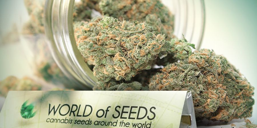 World Of Seeds Genetica Voor Iedereen