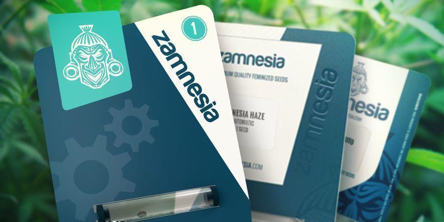 Zamnesia Seeds: Een Bescheiden Begin