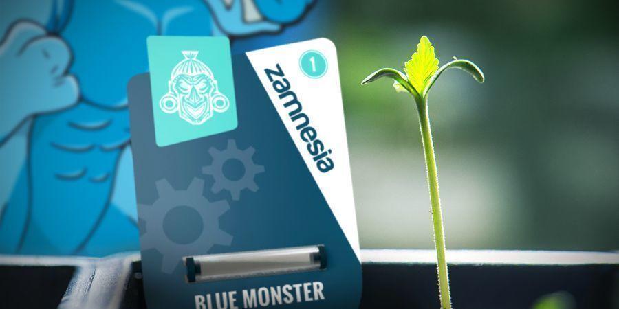 BLUE MONSTER AUTOMATIC: KWEEKINFO