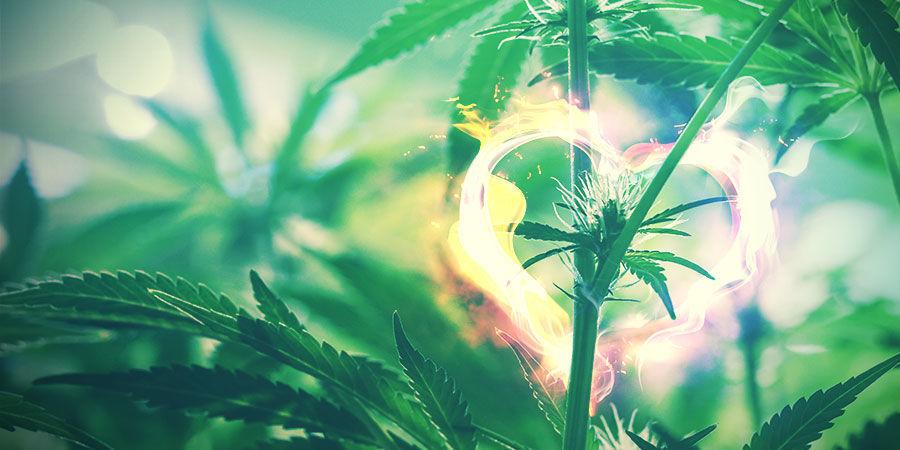 Cannabiskweekruimte: Houd De Boel Netjes