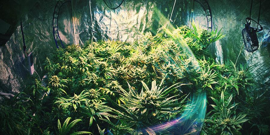 Cannabiskweekruimte: Kies De Juiste Plek