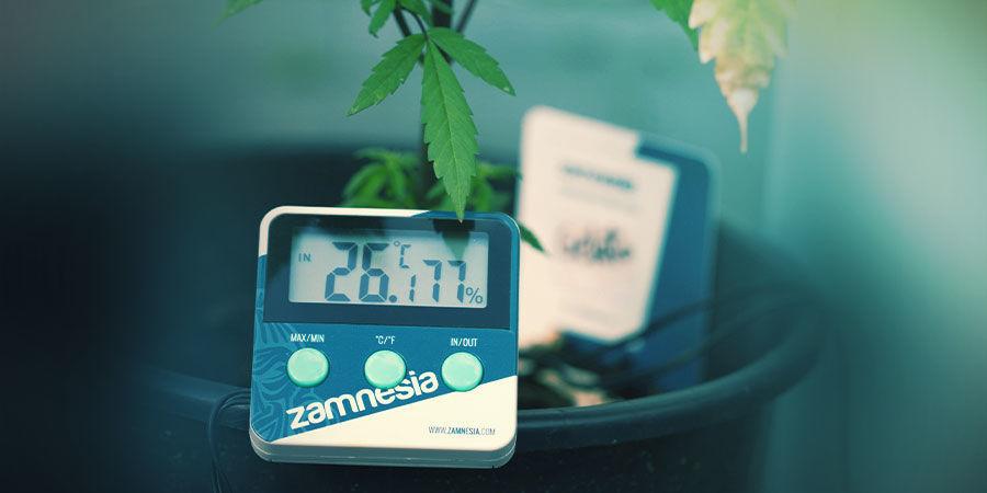 Cannabiskweekruimte: Temperatuur En Vochtigheid