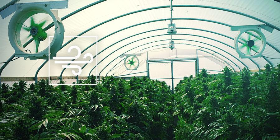 Cannabiskweekruimte: Ventilatie