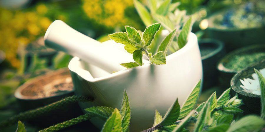 Gefermenteerd Plantensap Cannabis Voedingsstoffen