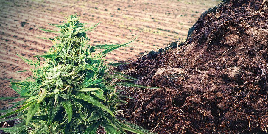 Mest Of Urine Voedingsstoffen Cannabis