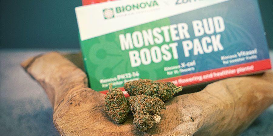 Wat is Monster Bud Boost Pack