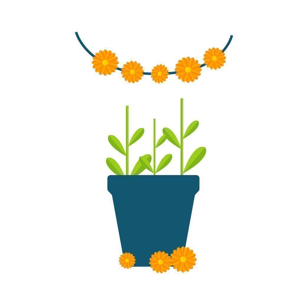Pluk de bloemen