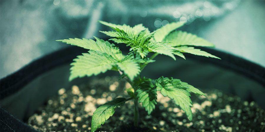Drainage - Wietplanten Kweken