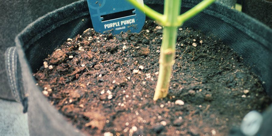 Flexibiliteit - Wietplanten Kweken