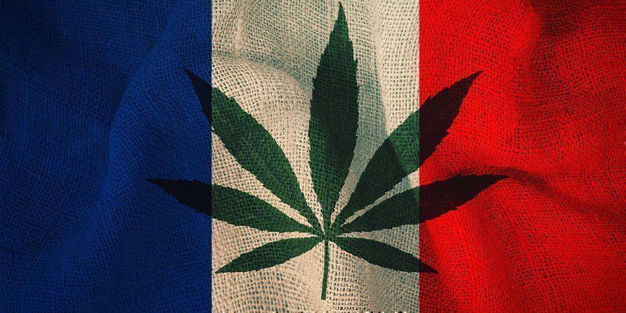 Frankrijk en cannabis: Het plan van het comité