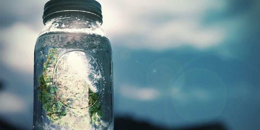 Cannabiszout: Stapsgewijze instructies
