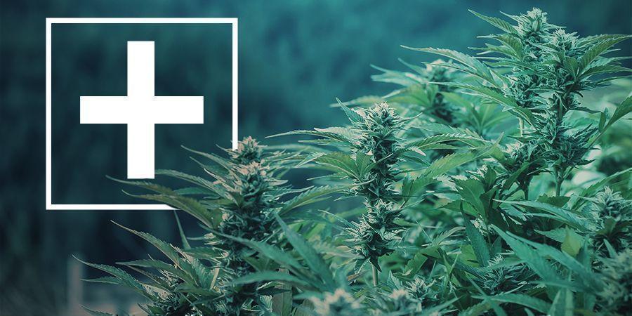 Voordelen van fast flowering cannabis strains