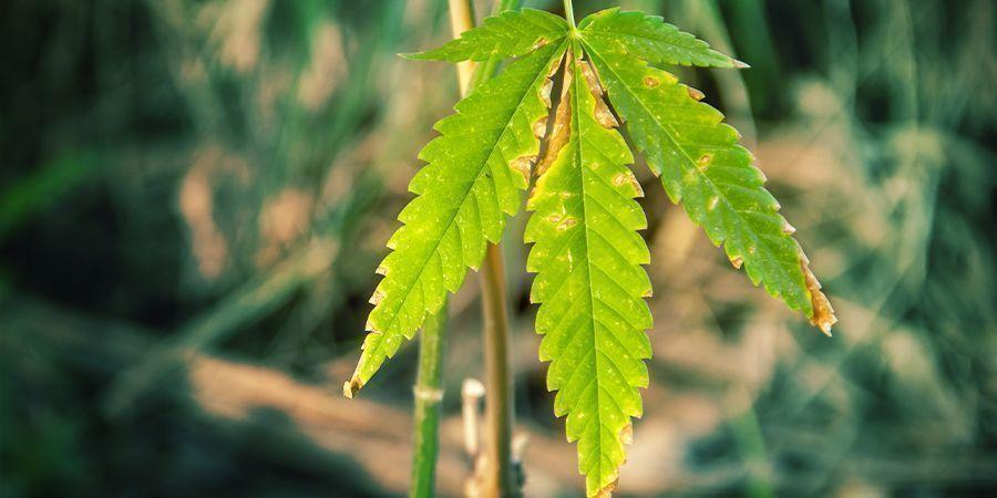 Aarde Bevordert de Gezondheid van Planten