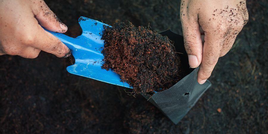 Waarom Je Geen Oude Grond voor Je Wietplanten Kunt Gebruiken