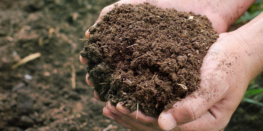 Droog, Vezelig Compost