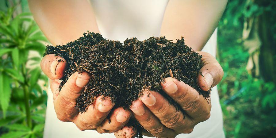 Hoe Maak Je Zelf Compost Voor Cannabisplanten?