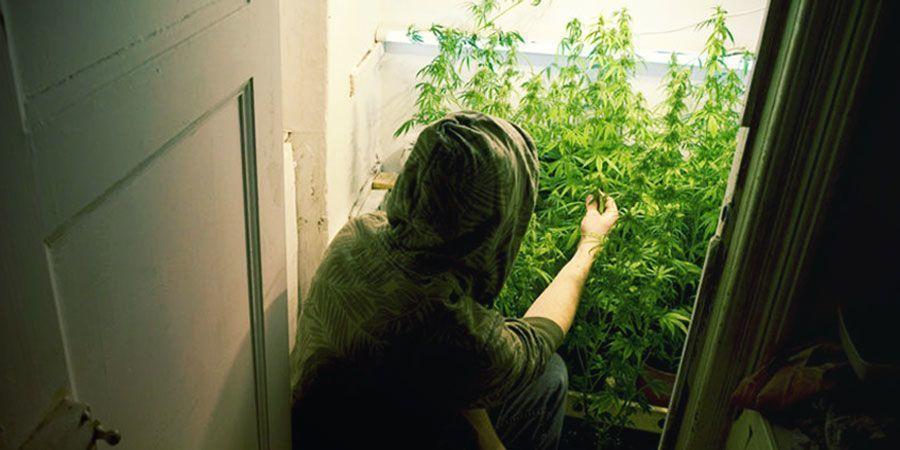 Wiet kweken in een kast