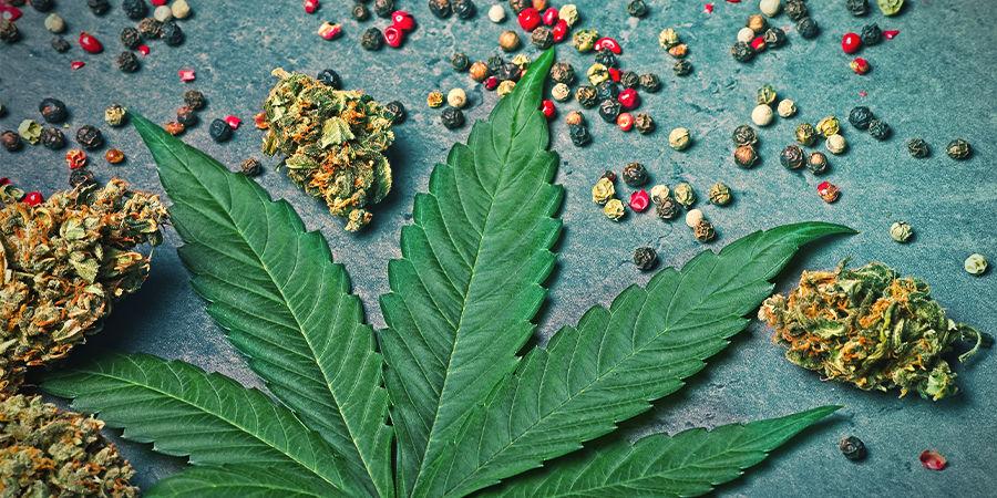 Caryofylleen In Cannabis